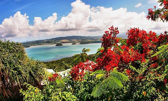 La Martinique, fleur des Caraïbes