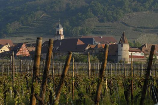 Route des vins : découvrez la Haute-Alsace