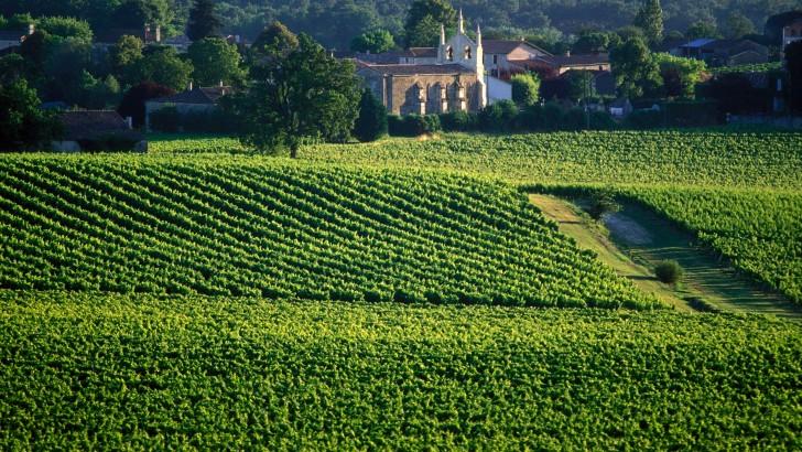 Vignobles bordelais : la route du vin mythique de Bordeaux