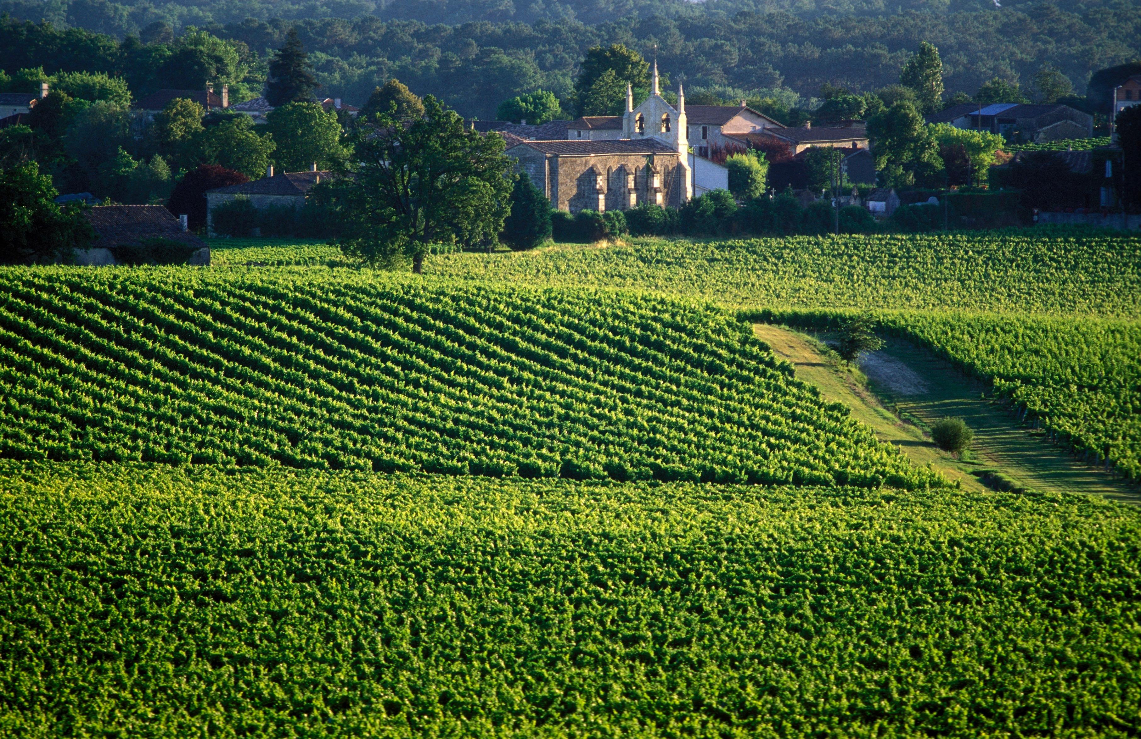 vignobles bordelais - Photo