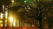 Bretagne, à la découverte de la légendaire forêt de Brocéliande
