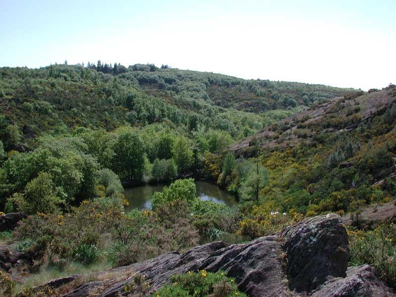 Val Sans Retour et Arbre d'Or - Brocéliande bretagne