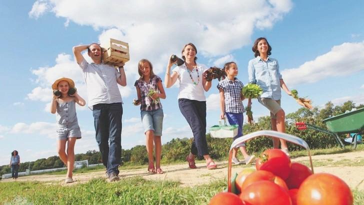 Cueillette de fruits : le temps des vergers