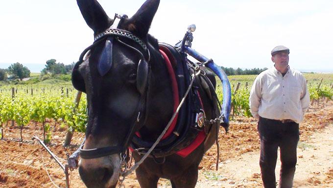 La Clape secrète en Languedoc