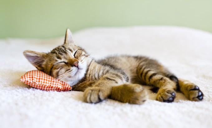 Des siestes pour mieux dormir le soir