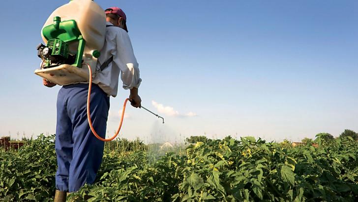 Pesticides : ce qui se cache dans nos assiettes
