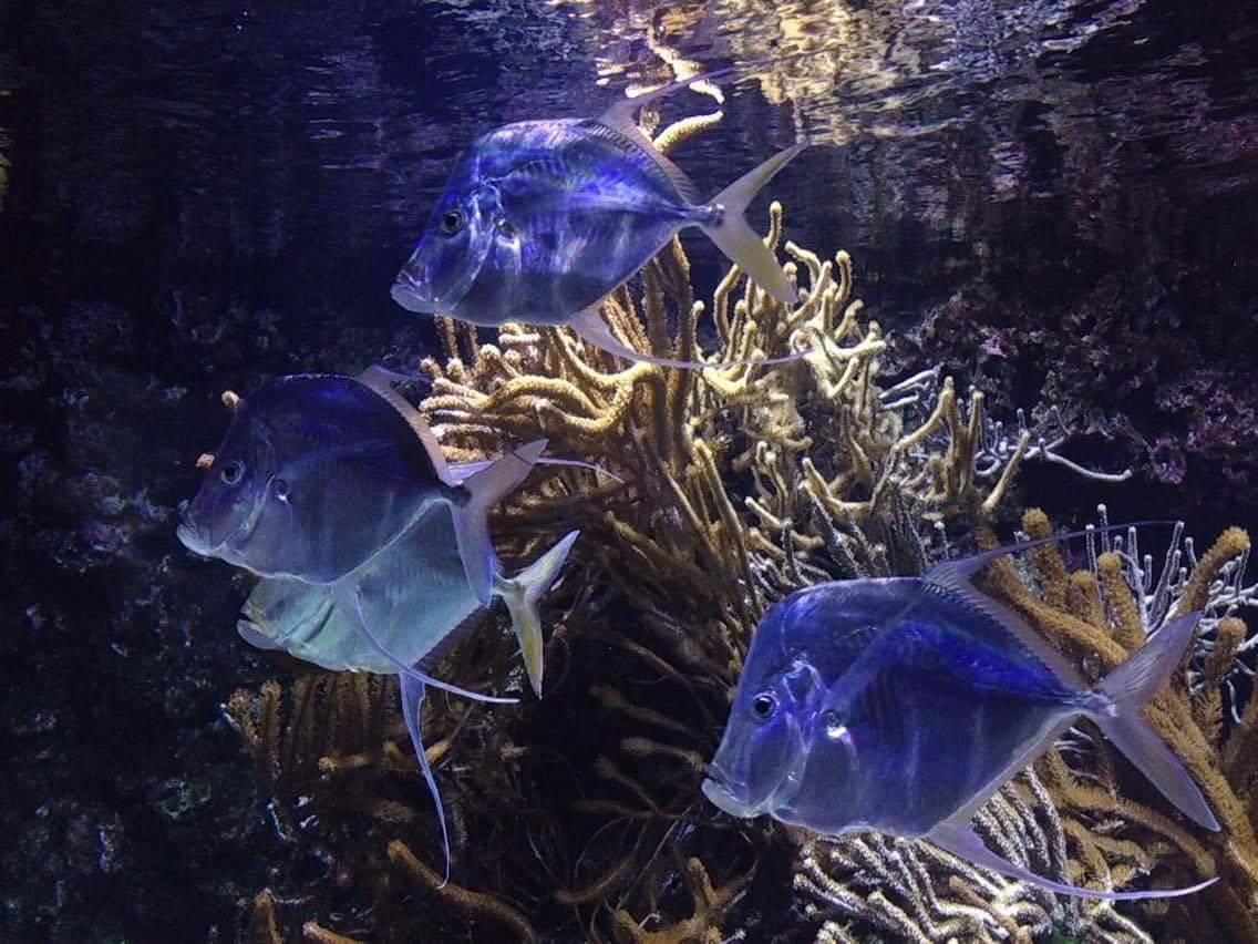 poissons aquarium de la rochelle