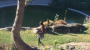 Yoga et Sylvothérapie:  le duo gagnant de l'été en Ardèche du sud